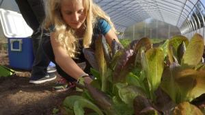 Harvesting fresh veggies for lunch.